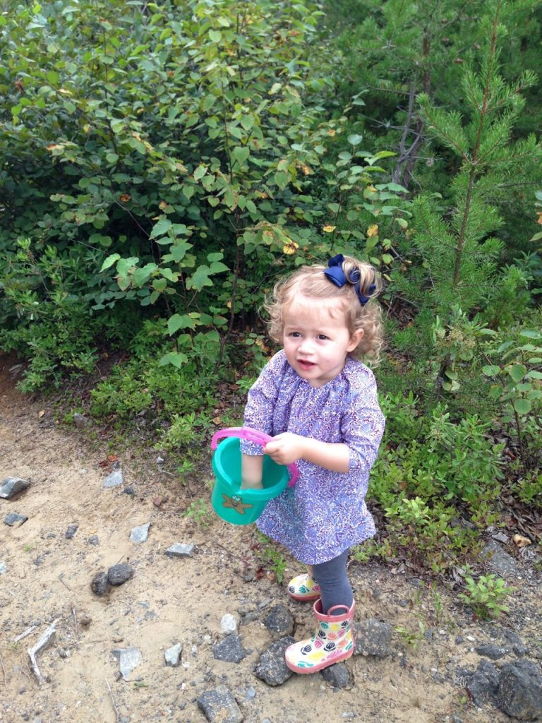 Searching for blueberries.
