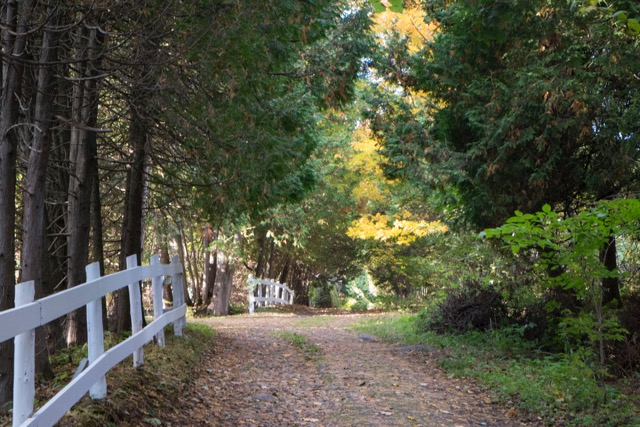 A tree-lined lane in Murray Bay.