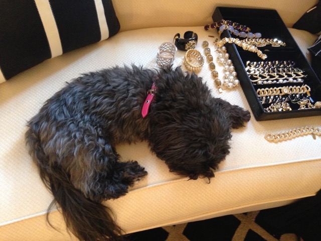 Pal the dog surrounded by sparkling jewels.