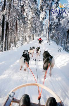 "Let a team of Alaskan huskies guide you through the frozen forest on an adrenaline-pumping sled adventure. Learn to ""mush"" and, if conditions allow, to drive your own sleigh."