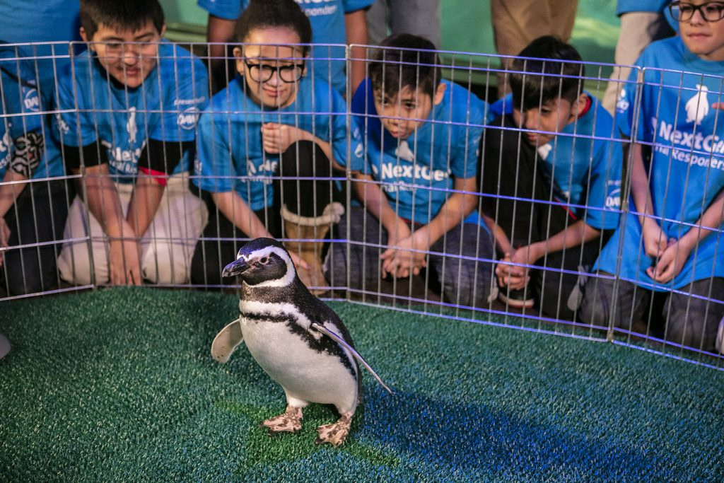 Shedd Aquarium penguin, Georgia, has all eyes on her as fifth grade students from Telpochcalli Elementary Public School ask animal care questions to Shedd Animal Response Team experts.