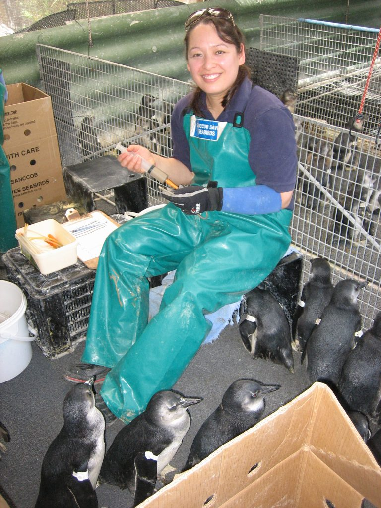 Team members hand feed the rescued penguins: fish smoothies for the chicks and entire fish for the older penguins.